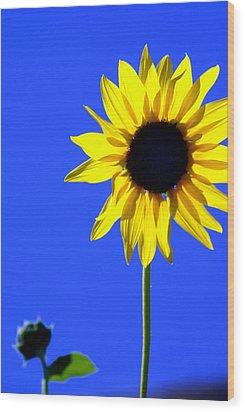 Sunflower 2 Wood Print by Marty Koch