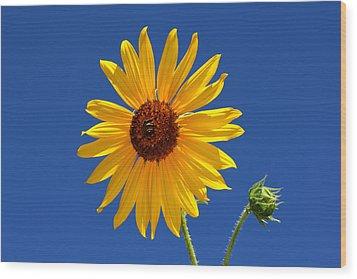 Sunflower Against Blue Sky Wood Print by Tracie Kaska