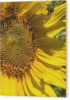 Sunflower And Bee Wood Print by Darice Machel McGuire