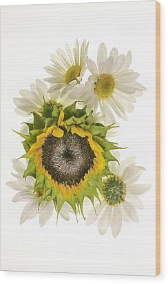 Sunflower And Daisies Wood Print by Roman Kurywczak