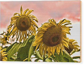 Sunflower Art 1 Wood Print