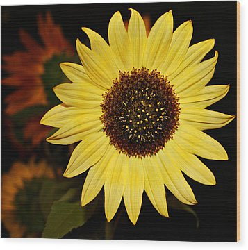 Sunflower Wood Print by Cathie Tyler