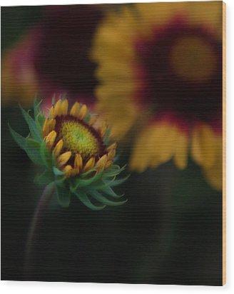 Sunflower Wood Print by Cherie Duran