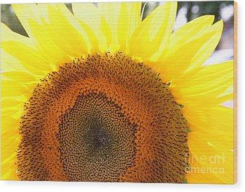 Sunflower Wood Print by Chuck Kuhn