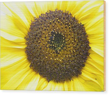 Sunflower Close Up Wood Print by Sonya Chalmers