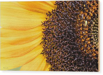 Wood Print featuring the photograph Sunflower Closeup by Bob Orsillo