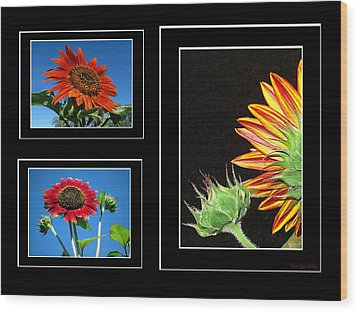 Wood Print featuring the photograph Sunflower Collage by Joyce Dickens