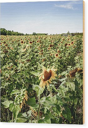 Wood Print featuring the photograph Sunflower Field by Alexey Stiop