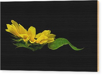 Wood Print featuring the photograph Sunflower Float by Elsa Marie Santoro