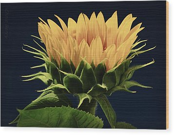 Wood Print featuring the photograph Sunflower Foliage And Petals by Chris Berry