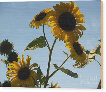 Sunflower Gang From Below Wood Print by Anna Lisa Yoder