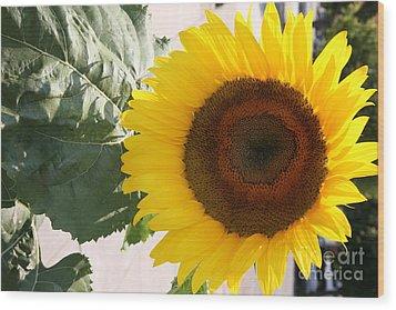 Sunflower II Wood Print by Chuck Kuhn
