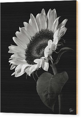 Sunflower In Black And White Wood Print
