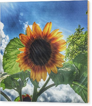Wood Print featuring the photograph Sunflower by Jame Hayes
