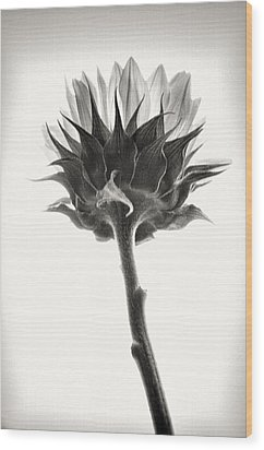 Wood Print featuring the photograph Sunflower by John Hansen