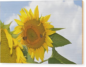 Sunflower Wood Print by Linda Geiger