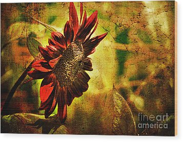 Sunflower Wood Print by Lois Bryan
