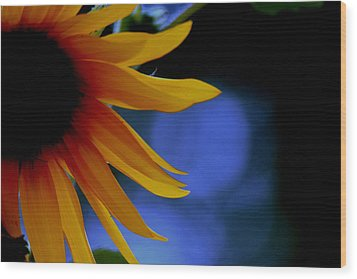 Sunflower Wood Print by Martin Morehead