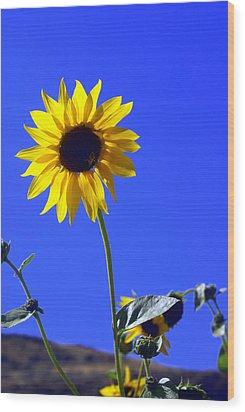 Sunflower Wood Print by Marty Koch