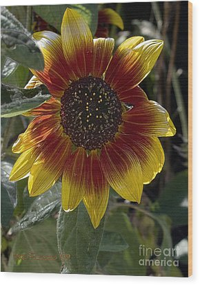 Wood Print featuring the photograph Sunflower by Michael Flood