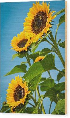 Sunflower Morning Wood Print