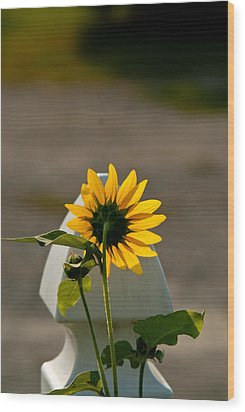 Sunflower Morning Wood Print by Douglas Barnett