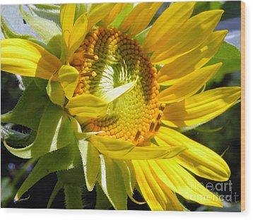 Sunflower No.35 Wood Print by Christine Belt