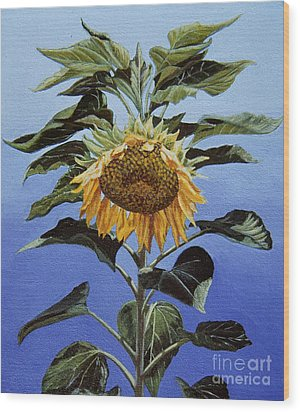 Sunflower Nodding Wood Print