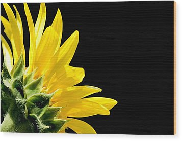 Sunflower On Black Wood Print