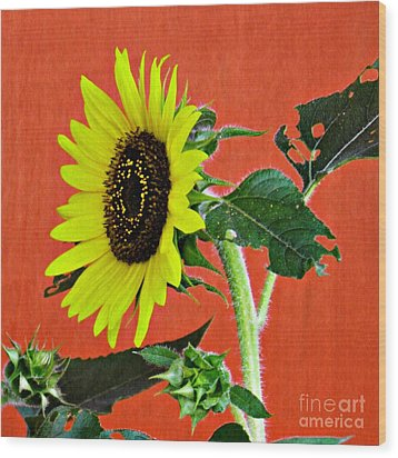 Wood Print featuring the photograph Sunflower On Red 2 by Sarah Loft