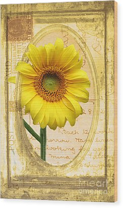 Sunflower On Vintage Postcard Wood Print by Nina Silver