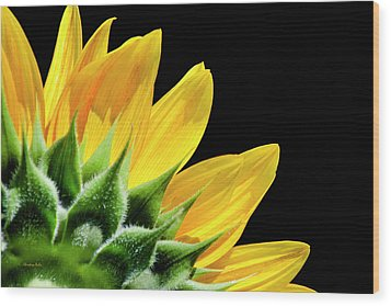 Wood Print featuring the photograph Sunflower Petals by Christina Rollo