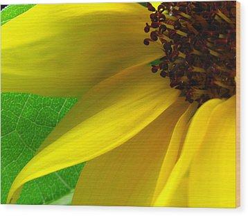 Sunflower Petals Wood Print by Juergen Roth
