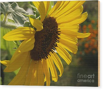 Sunflower Profile Wood Print by Anna Lisa Yoder