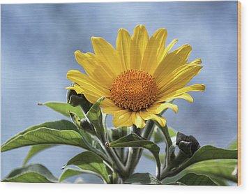 Wood Print featuring the photograph Sunflower  by Saija Lehtonen