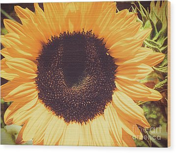 Sunflower Wood Print by Scott and Dixie Wiley