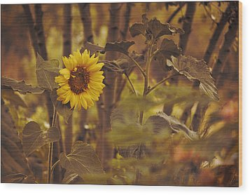 Wood Print featuring the photograph Sunflower Sentry by Douglas MooreZart