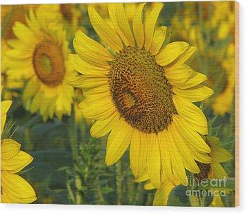 Sunflower Series Wood Print by Amanda Barcon
