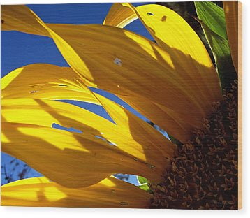 Sunflower Shadows Wood Print