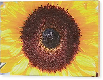 Sunflower Wood Print by Shirin Shahram Badie