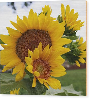 Wood Print featuring the photograph Sunflower Show by Bruce Bley