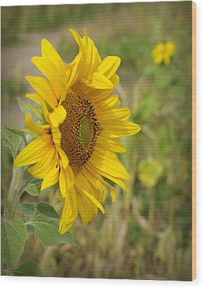 Sunflower Show Off Wood Print by Linda Mishler