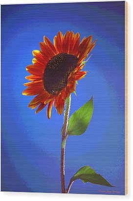 Wood Print featuring the photograph sunflower Solitaire by Joyce Dickens
