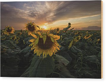 Wood Print featuring the photograph Sunflower Sunstar  by Aaron J Groen