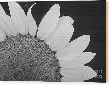 Sunflower Three Quarter Wood Print by James BO  Insogna