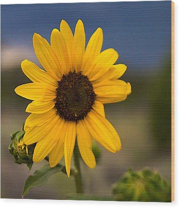 Sunflower Wood Print by William Wetmore