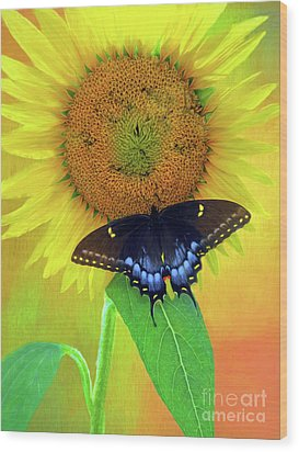 Sunflower With Company Wood Print by Marion Johnson