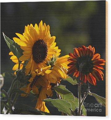 Sunflowers 8 Wood Print by Marjorie Imbeau