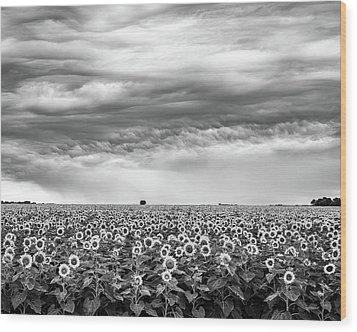 Sunflowers And Rain Showers Wood Print