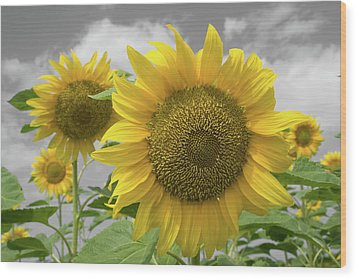 Sunflowers IIi Wood Print